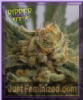 Ripper Grape Gum Female 5 Marijuana Seeds